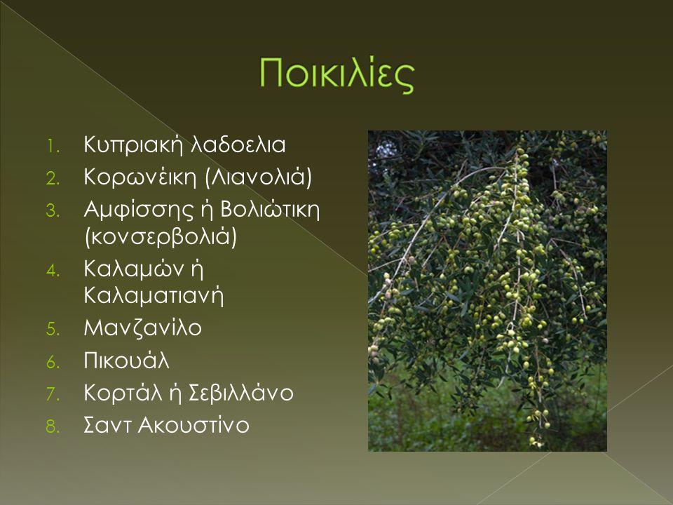Ποικιλίες Kυπριακή λαδοελια Kορωνέικη (Λιανολιά)