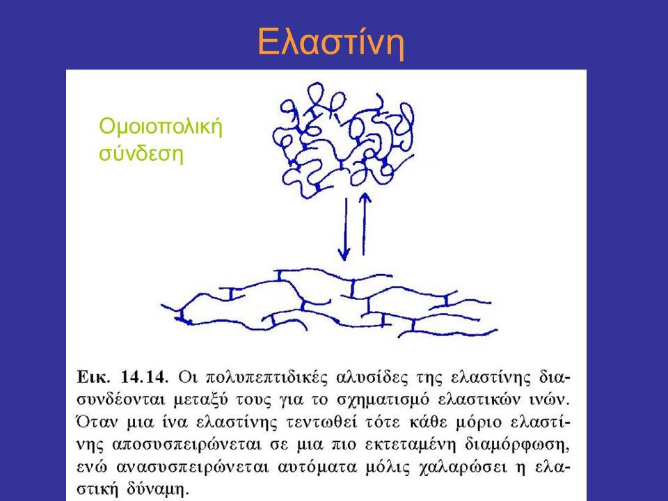 Ελαστίνη Ομοιοπολική σύνδεση