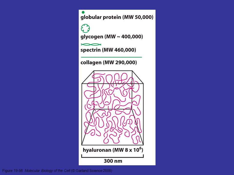 Figure 19-56 Molecular Biology of the Cell (© Garland Science 2008)