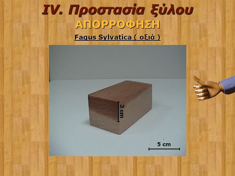Fagus Sylvatica ( οξιά )