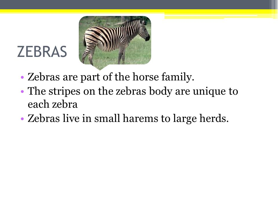 ZEBRAS Zebras are part of the horse family.