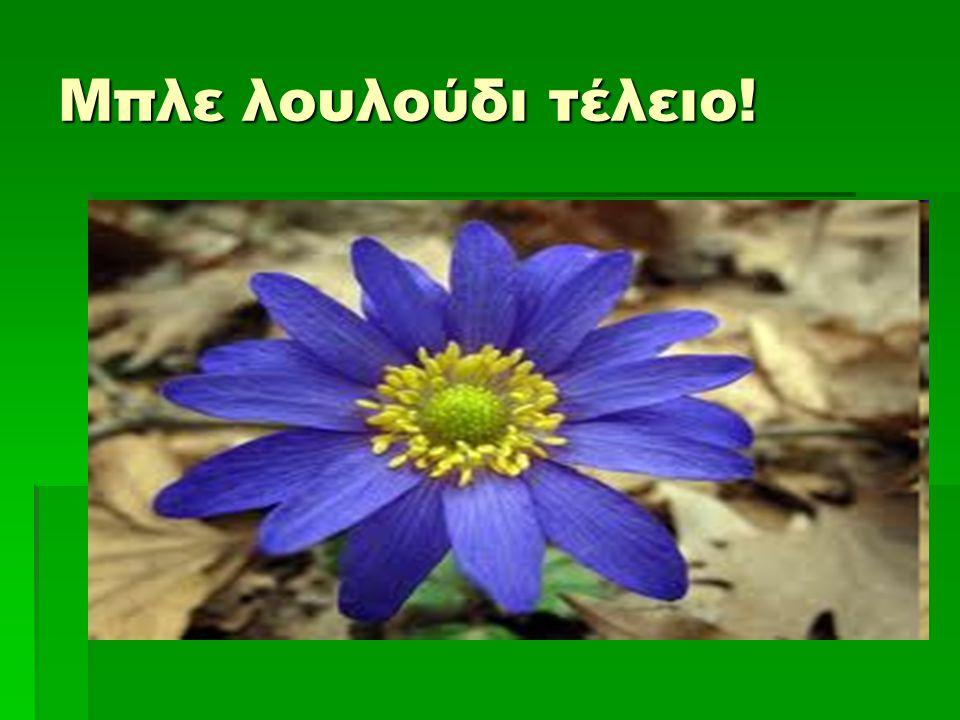 Μπλε λουλούδι τέλειο!