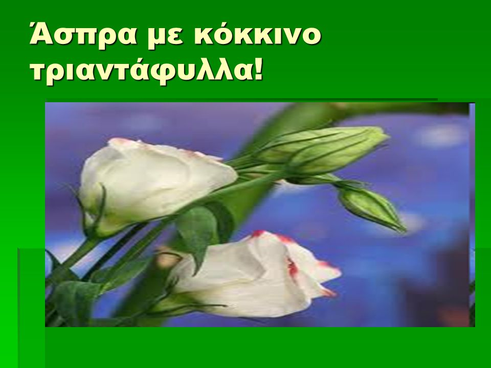 Άσπρα με κόκκινο τριαντάφυλλα!