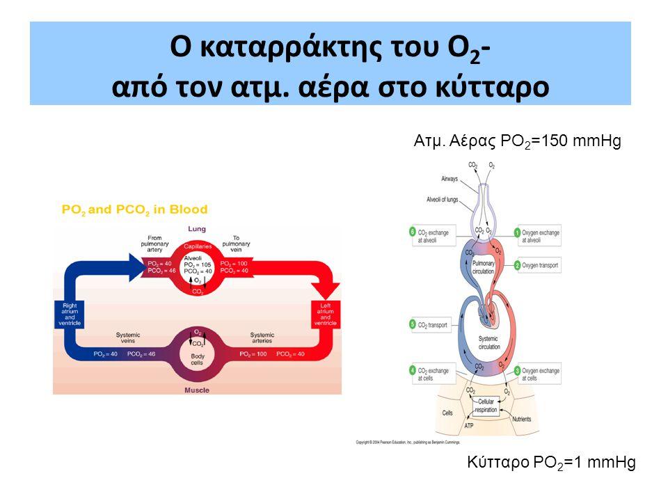 Ο καταρράκτης του Ο2- από τον ατμ. αέρα στο κύτταρο