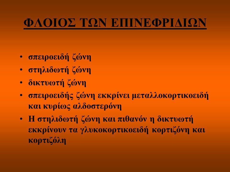 ΦΛΟΙΟΣ ΤΩΝ ΕΠΙΝΕΦΡΙΔΙΩΝ