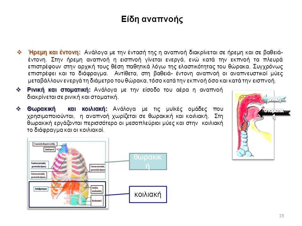 Είδη αναπνοής θωρακική κοιλιακή