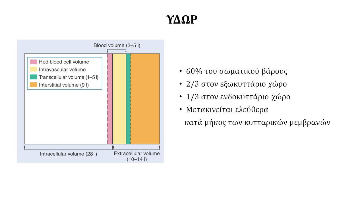 ΥΔΩΡ 60% του σωματικού βάρους 2/3 στον εξωκυττάριο χώρο