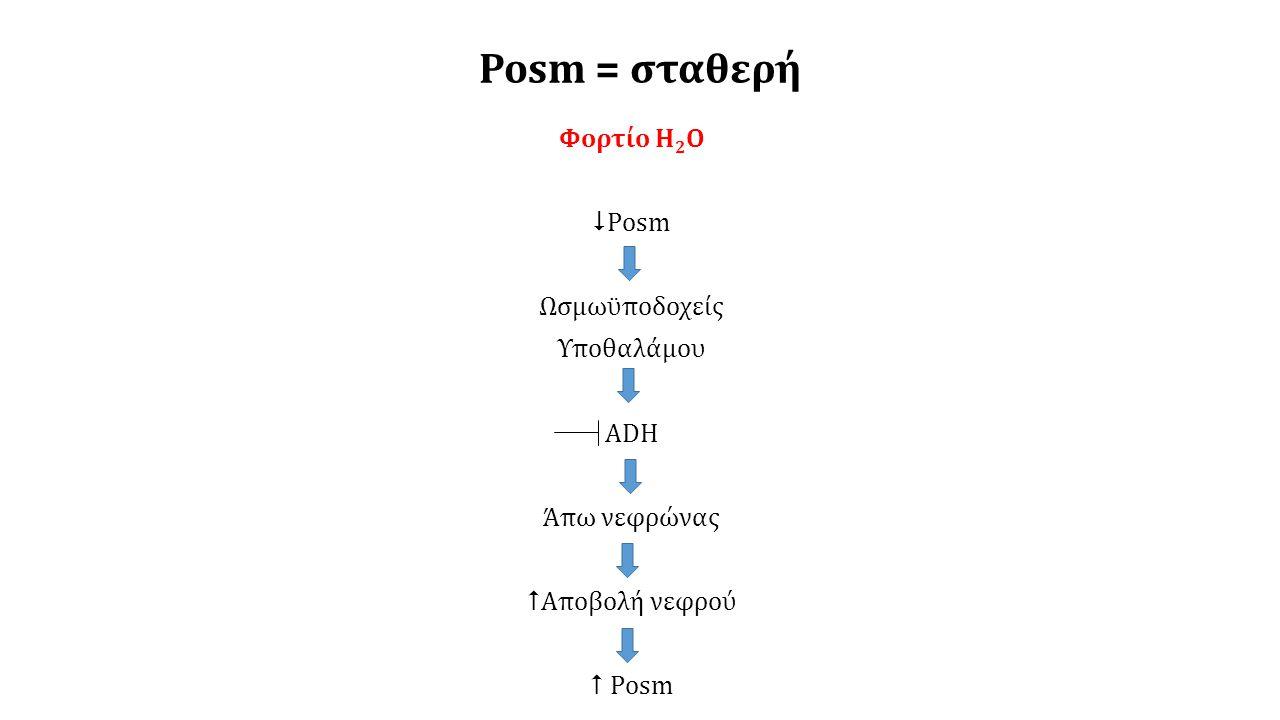 Posm = σταθερή Φορτίο Η2Ο Posm Ωσμωϋποδοχείς Υποθαλάμου ADH Άπω νεφρώνας Αποβολή νεφρού  Posm