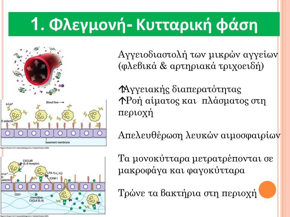1. Φλεγμονή- Κυτταρική φάση
