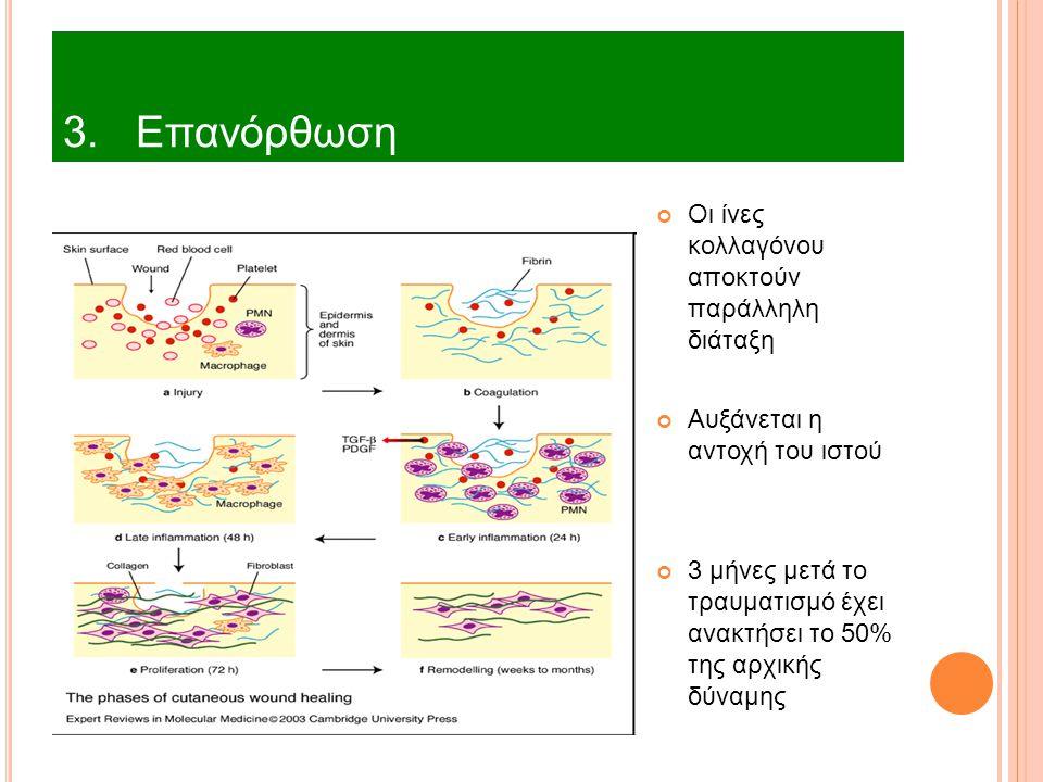 3. Επανόρθωση Οι ίνες κολλαγόνου αποκτούν παράλληλη διάταξη