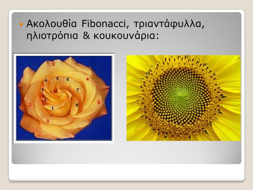 Ακολουθία Fibonacci, τριαντάφυλλα, ηλιοτρόπια & κουκουνάρια: