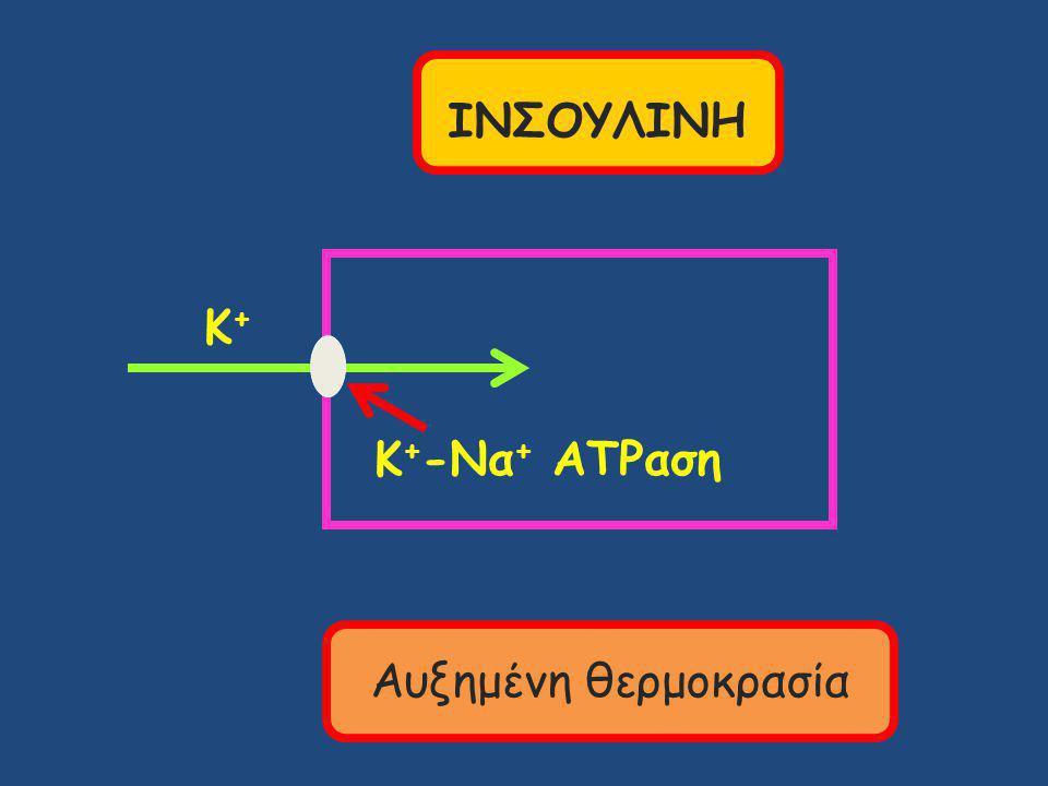ΙΝΣΟΥΛΙΝΗ Κ+ Κ+-Να+ ATPαση Αυξημένη θερμοκρασία