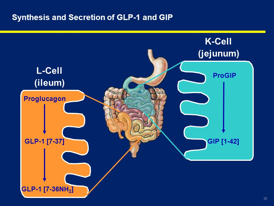 Synthesis and Secretion of GLP-1 and GIP