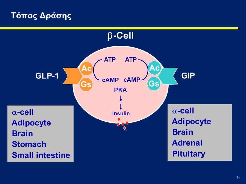 -Cell Τόπος Δράσης Ac Ac GLP-1 GIP Gs Gs -cell -cell Adipocyte