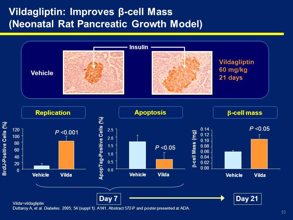 Vildagliptin: Improves β-cell Mass (Neonatal Rat Pancreatic Growth Model)