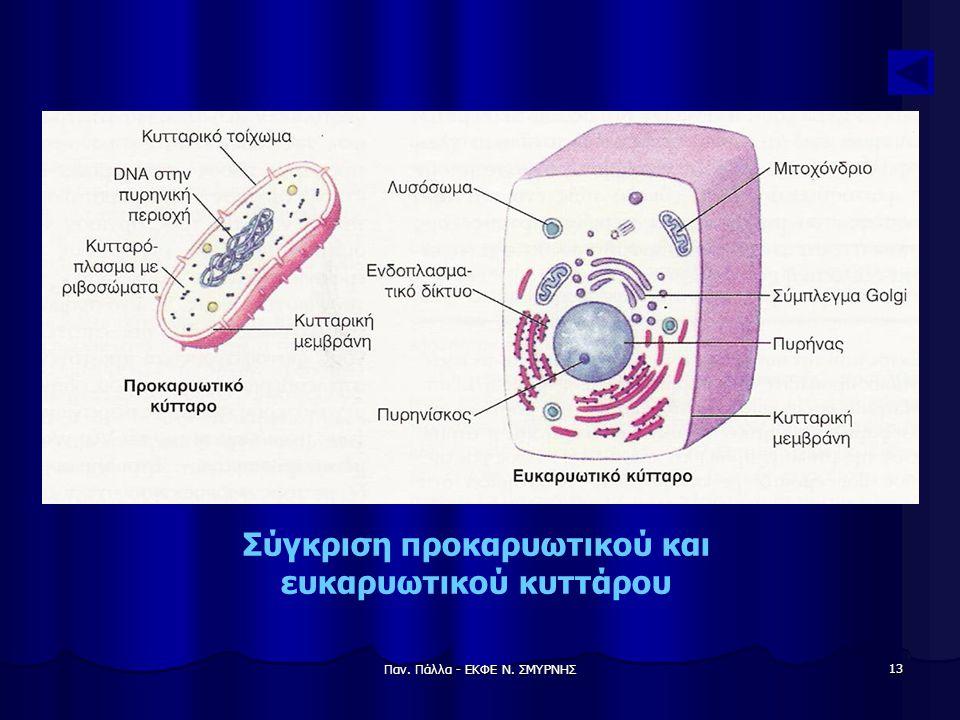 Σύγκριση προκαρυωτικού και ευκαρυωτικού κυττάρου