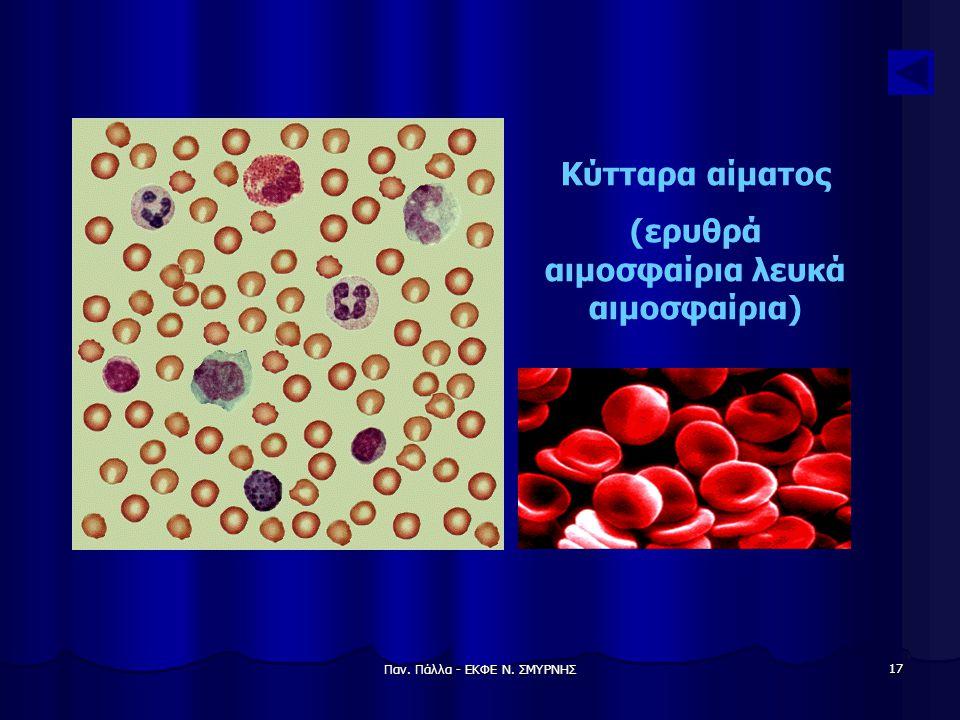 (ερυθρά αιμοσφαίρια λευκά αιμοσφαίρια)