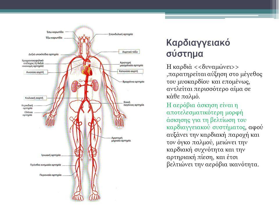 Καρδιαγγειακό σύστημα