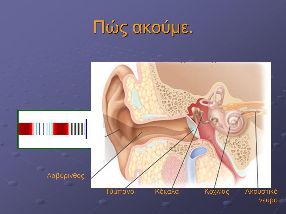 Πώς ακούμε. Λαβύρινθος Τύμπανο Κόκαλα Κοχλίας Ακουστικό νεύρο