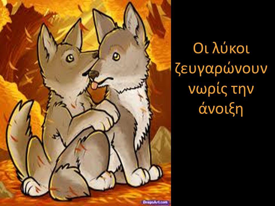 Οι λύκοι ζευγαρώνουν νωρίς την άνοιξη