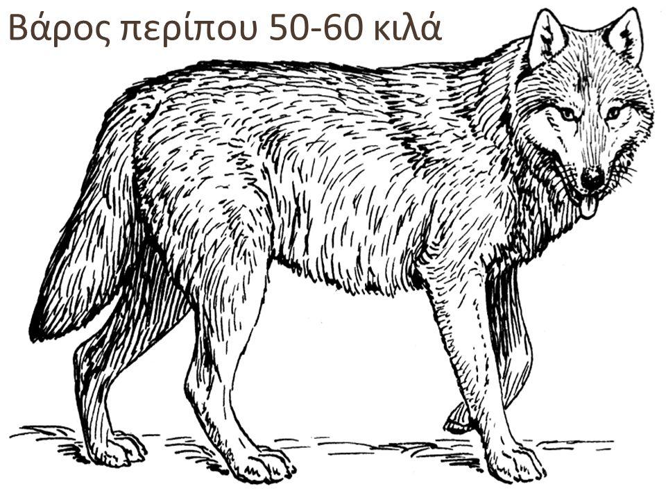 Βάρος περίπου 50-60 κιλά