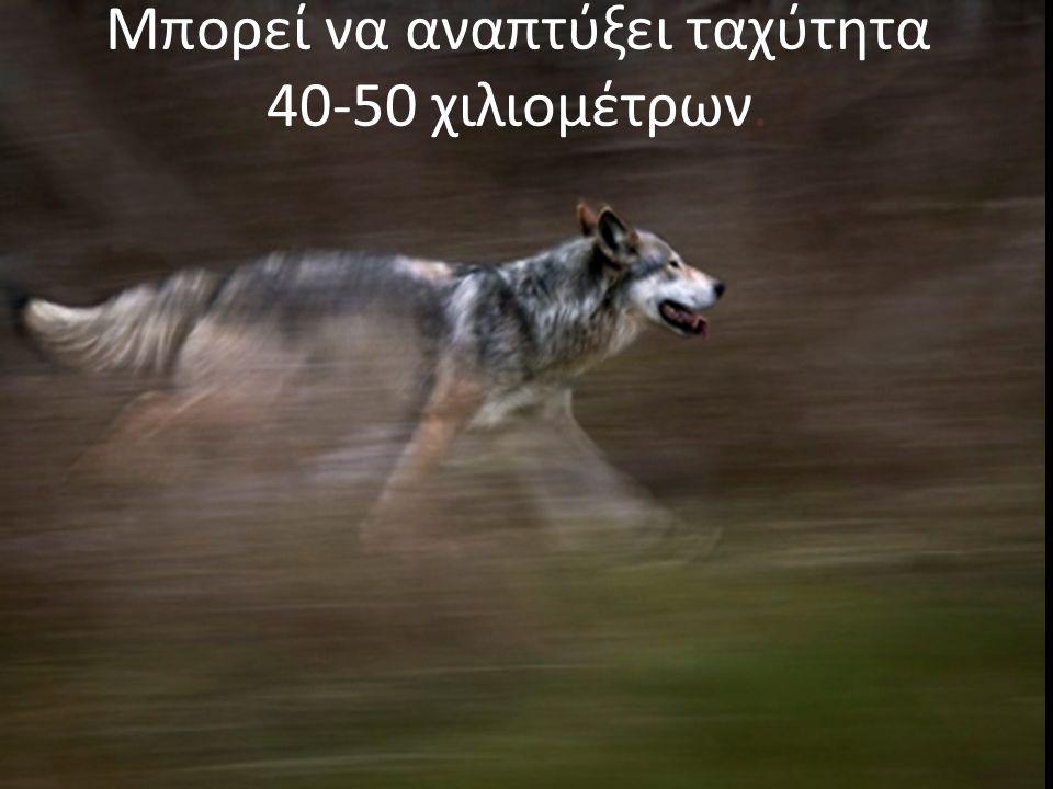 Μπορεί να αναπτύξει ταχύτητα 40-50 χιλιομέτρων.