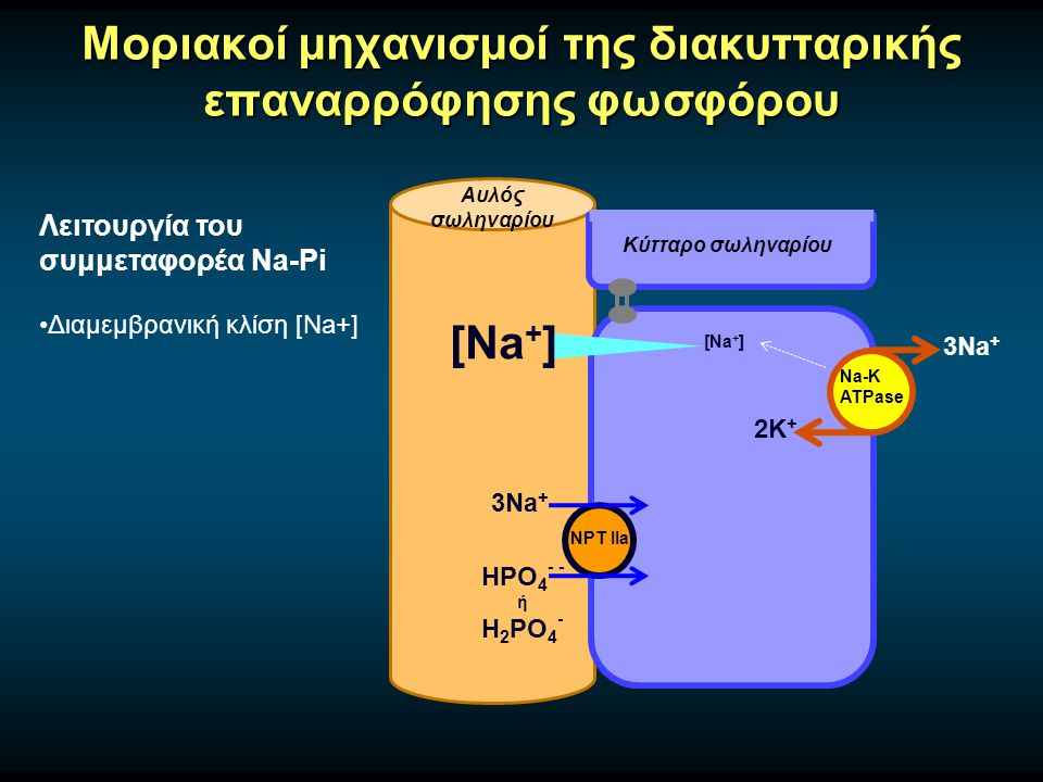 Μοριακοί μηχανισμοί της διακυτταρικής επαναρρόφησης φωσφόρου