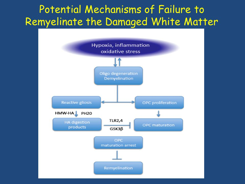 Potential Mechanisms of Failure to Remyelinate the Damaged White Matter