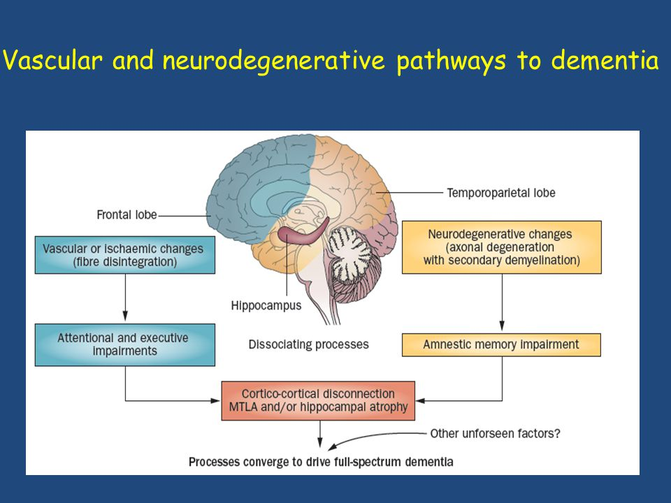 Vascular and neurodegenerative pathways to dementia