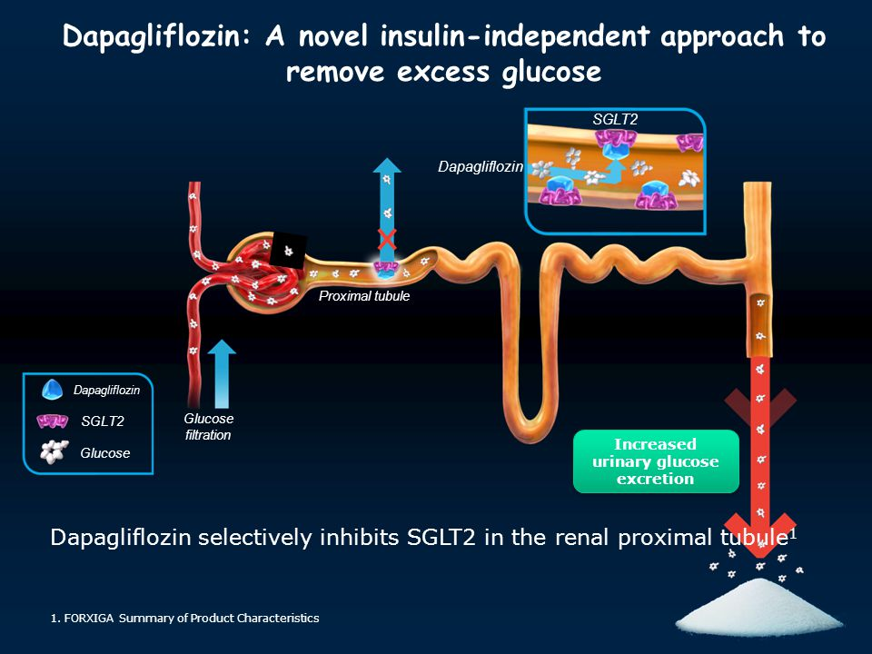 Increased urinary glucose excretion