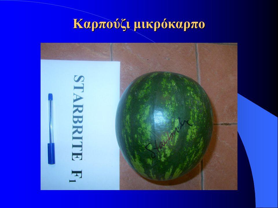 Καρπούζι μικρόκαρπο