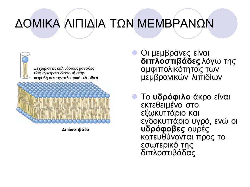 ΔΟΜΙΚΑ ΛΙΠΙΔΙΑ ΤΩΝ ΜΕΜΒΡΑΝΩΝ