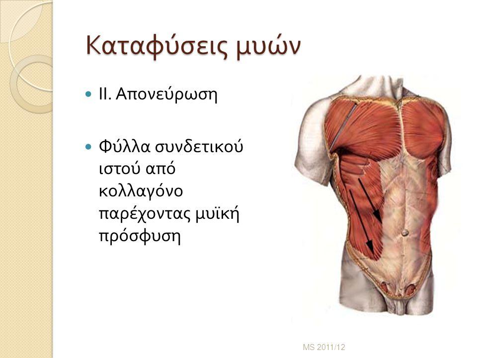 Καταφύσεις μυών ΙΙ. Απονεύρωση