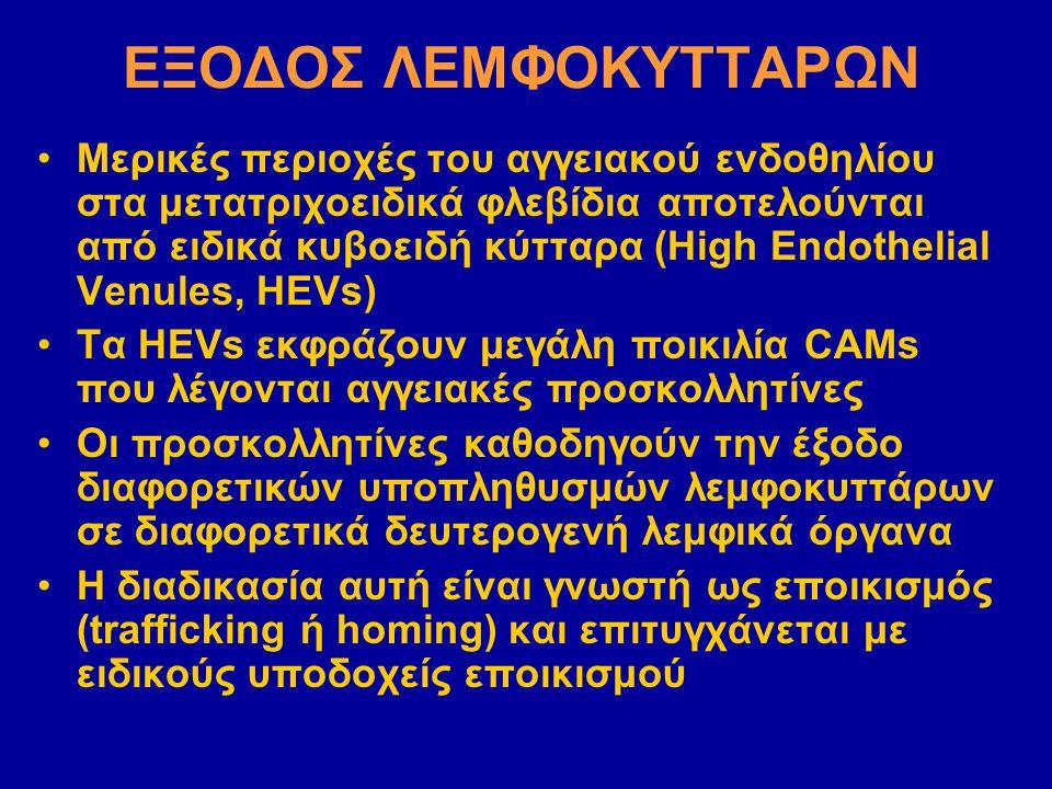 ΕΞΟΔΟΣ ΛΕΜΦΟΚΥΤΤΑΡΩΝ
