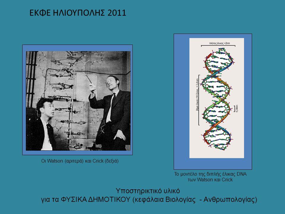 ΕΚΦΕ ΗΛΙΟΥΠΟΛΗΣ 2011 Υποστηρικτικό υλικό