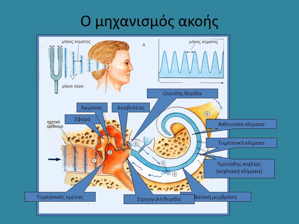 Υμενώδης κοχλίας (κοχλιακή κλίμακα)