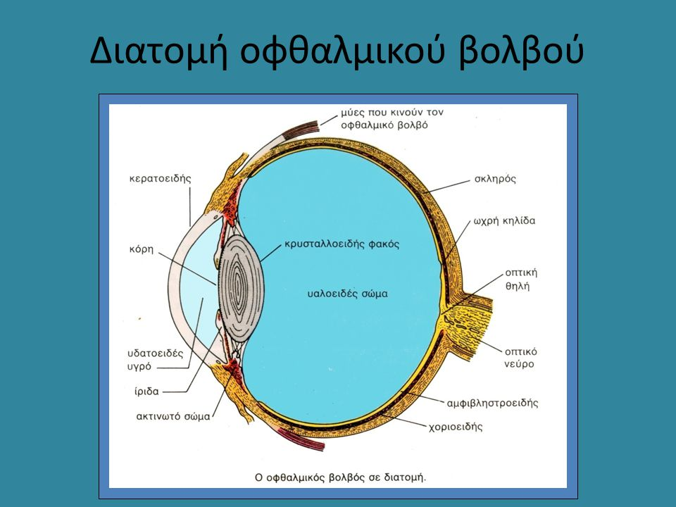 Διατομή οφθαλμικού βολβού