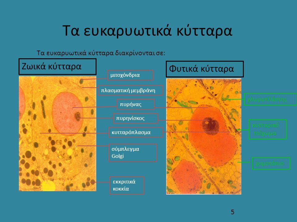Τα ευκαρυωτικά κύτταρα