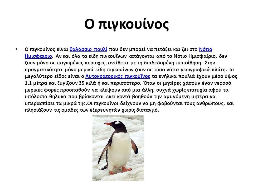 Ο πιγκουίνος