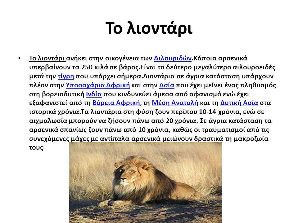 Το λιοντάρι