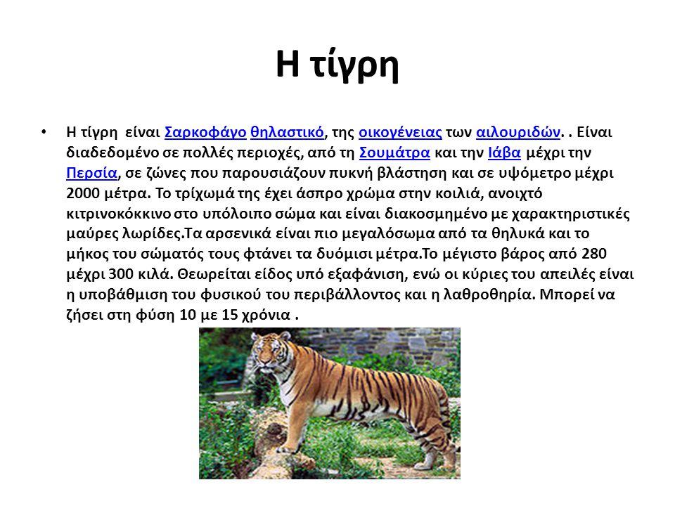 Η τίγρη