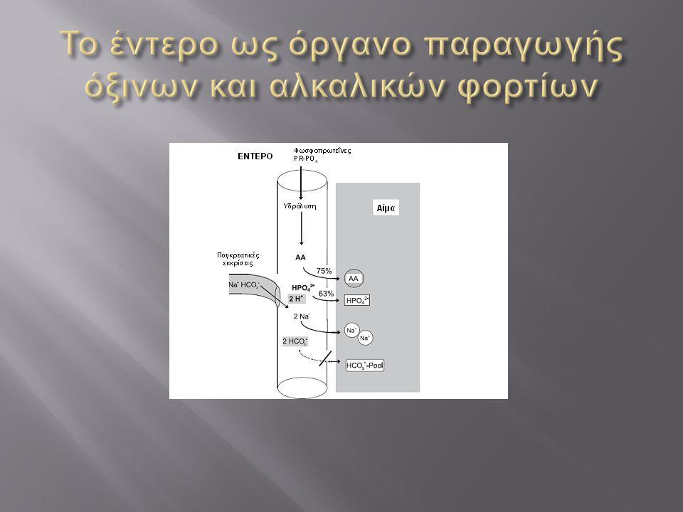 Το έντερο ως όργανο παραγωγής όξινων και αλκαλικών φορτίων
