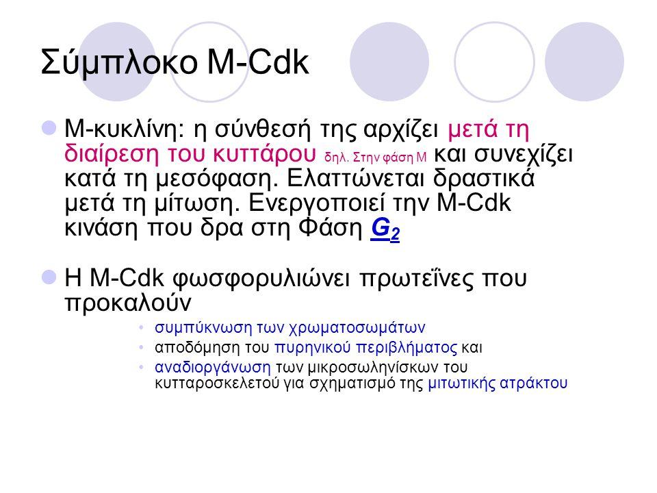 Σύμπλοκο Μ-Cdk