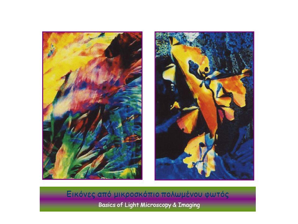 Εικόνες από μικροσκόπιο πολωμένου φωτός Basics of Light Microscopy & Imaging