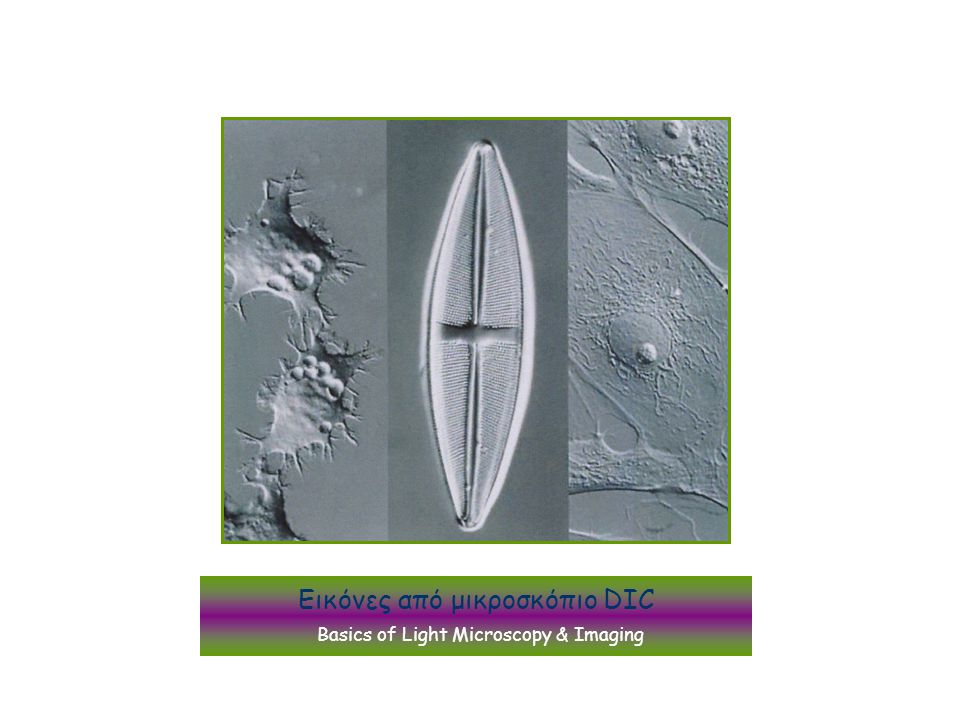 Εικόνες από μικροσκόπιο DIC Basics of Light Microscopy & Imaging
