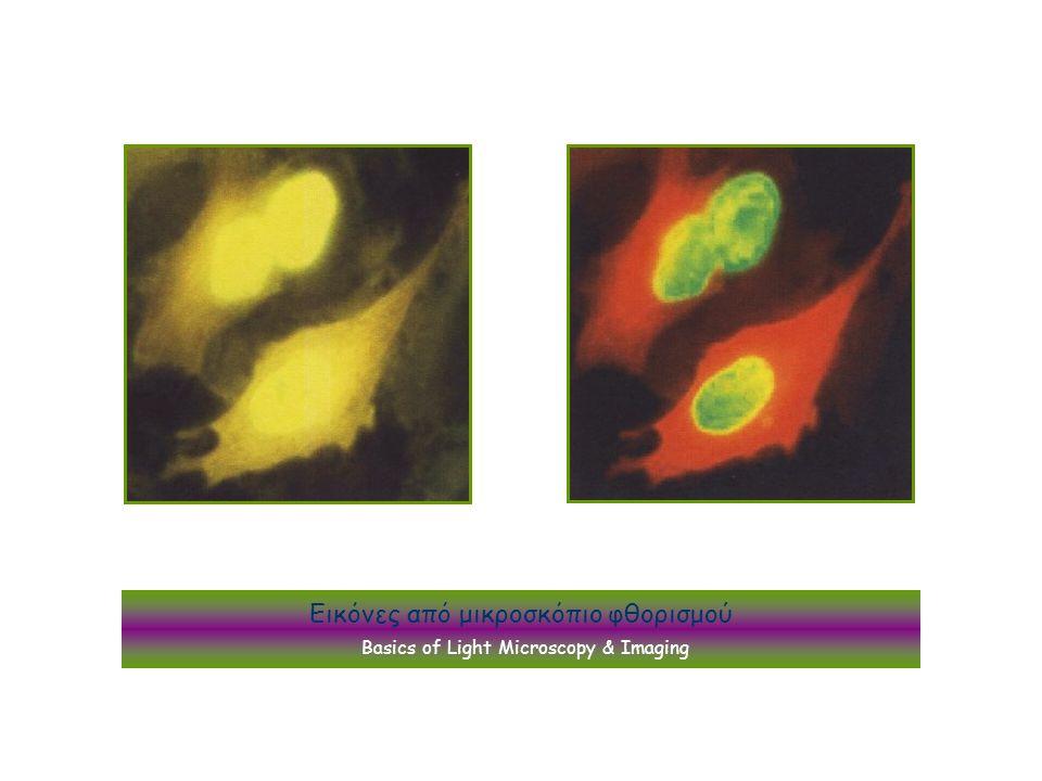 Εικόνες από μικροσκόπιο φθορισμού Basics of Light Microscopy & Imaging