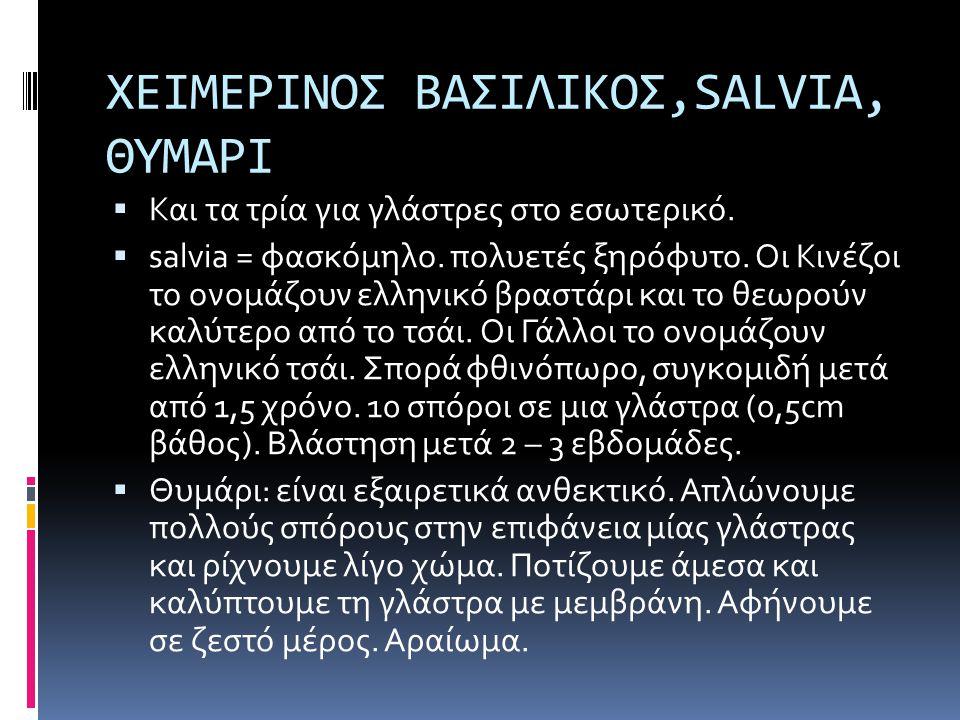 ΧΕΙΜΕΡΙΝΟΣ ΒΑΣΙΛΙΚΟΣ,SALVIA, ΘΥΜΑΡΙ