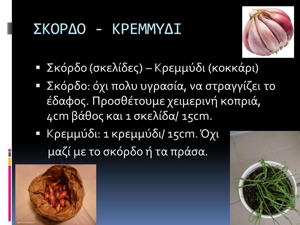 ΣΚΟΡΔΟ - ΚΡΕΜΜΥΔΙ Σκόρδο (σκελίδες) – Κρεμμύδι (κοκκάρι)