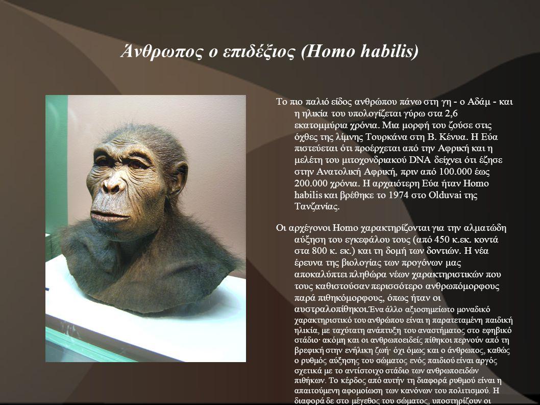 Άνθρωπος ο επιδέξιος (Homo habilis)