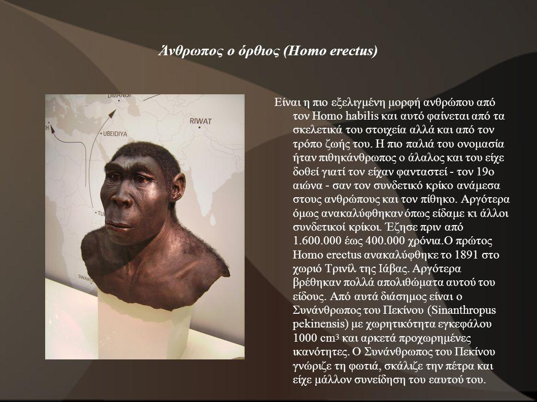Άνθρωπος ο όρθιος (Homo erectus)
